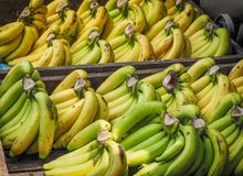 Bunch of ripened organic bananas Stock Photography