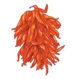 Bunch_ristra dos pimentões Imagens de Stock
