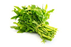A bunch of rocket arugula isolated on white background royalty free stock image