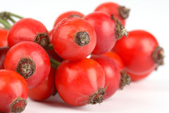 Bunch of rose hips Stock Images