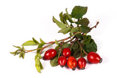 Bunch of rosehip berries with some green leaves. Isolated on white background Stock Images