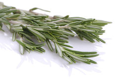 Bunch of rosemary Royalty Free Stock Photo