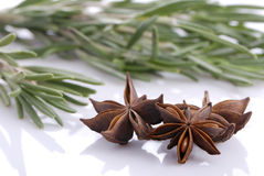 Bunch of rosemary and and anise stars Royalty Free Stock Image