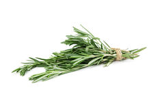 Bunch of rosemary Royalty Free Stock Image
