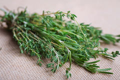 Bunch of rosemary and thyme Royalty Free Stock Images