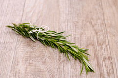 Bunch of rosemary on wood Stock Image