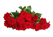 Bunch of roses Royalty Free Stock Photography