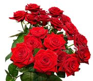 Bunch of roses Royalty Free Stock Photos