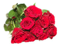 Bunch of roses. Isolated bunch of the red roses royalty free stock photo