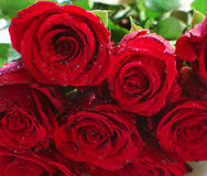 Bunch of roses. Close up of bunch of red roses stock images