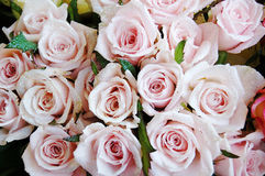 Bunch of roses. Close up of a bunch of roses royalty free stock images