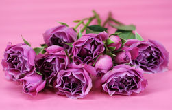 Bunch of Roses. A bunch of bright pink roses on a pink background Stock Images