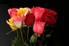 Bunch of roses stock images