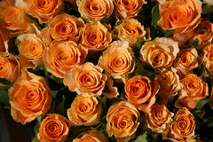 Bunch of roses. Colorful roses on a spring flea market at a florist booth stock photo