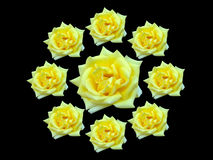 Bunch of roses. Bunch of yellow roses on black background stock photography