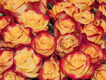A bunch of roses as a flower background. The shot was made at the international flower exhibition in Moscow in September,2013 royalty free stock images