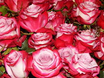 A bunch of roses as a flower background. The shot was made at the international flower exhibition in Moscow in September,2014 royalty free stock photos