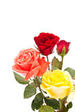 Bunch of roses flower Royalty Free Stock Image