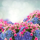 Bunch of roses and  hortensia flowers Royalty Free Stock Photo