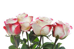 Bunch of roses isolated Royalty Free Stock Images