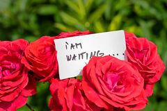 Bunch of Roses with Love Letter Royalty Free Stock Photography