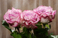 A bunch of Roses Royalty Free Stock Photography