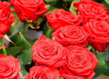 Bunch of Roses Stock Photography