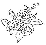 Bunch of roses sketch Royalty Free Stock Image