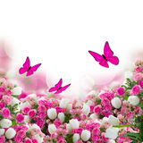 Bunch of roses and tulips flowers with butterflies Stock Photography
