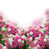Bunch of roses and  tulips flowers Royalty Free Stock Image