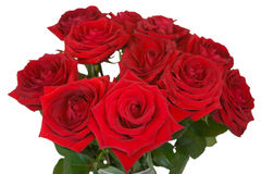 Bunch of roses on white background Stock Images