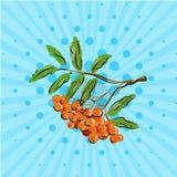 Bunch rowan berries on blue bakground. Vector illustration. Hand drawn on style pop art. Cartoon Royalty Free Stock Photos
