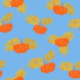 Bunch of rowan berries with yellowed leaves seamless pattern Royalty Free Stock Image
