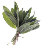 Bunch of sage fresh leaves Royalty Free Stock Photo