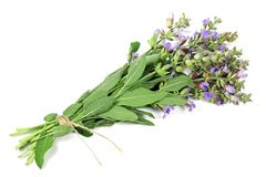 Bunch of sage. Isolated on white background royalty free stock image