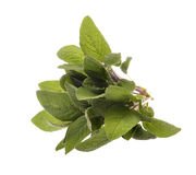 Bunch of sage leaves Stock Photography