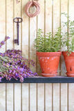Bunch of sage and pot with herbs Royalty Free Stock Images