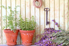 Bunch of sage and pots with herbs Stock Images
