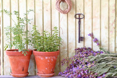Bunch of sage and pots with herbs Stock Image