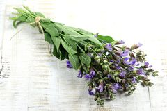 Bunch of sage. On wooden background royalty free stock image
