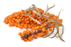 Bunch of sea buckthorn berries isolated on  white background Royalty Free Stock Image