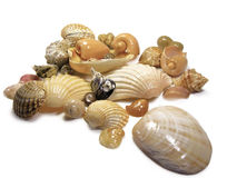 Bunch of sea shells. Bunch on sea shells isolated on a white background Royalty Free Stock Photo