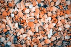 A bunch of sea shells Stock Photos