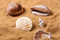 Bunch of sea shells in the sand on a beach Stock Photo