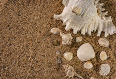 Bunch of Seashells on Beach Sand. Selective Focus On White Sea Shell And Copy Space. stock photography