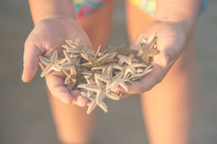 Bunch of seastars in the woman hands Stock Image