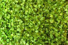 Bunch of seedlings Stock Photos