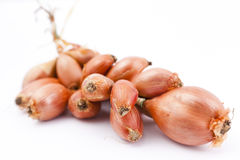 Bunch of Shallots Stock Images