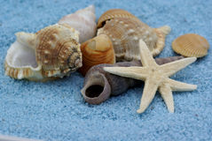 Bunch of shells. Stock Photo