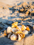 Bunch of shells. Some shells, from a french beach Royalty Free Stock Photos